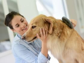 Udělejte psovi z denního česání příjemný rituál